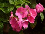Group Bunch Flowers - Public Domain Pictures