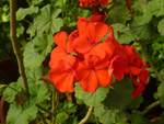 Group Flowers - Public Domain Pictures