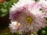 Nice Floral - Public Domain Pictures