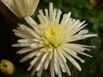 Nice Looking Flower - Public Domain Pictures