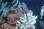 Coral Aquarium - Public Domain Pictures