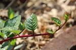 Leaf Branch - Public Domain Pictures