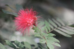 Wild Thorny Flower - Public Domain Pictures