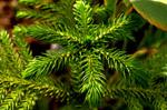 Leaves Ferns - Public Domain Pictures