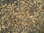 Dead Leaves Trash Ground - Public Domain Pictures