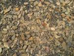 1505-dead-leaves-trash-ground - Public Domain Pictures