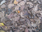Dirty Leaves Trash Ground - Public Domain Pictures