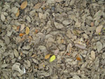 Leaves On Ground Rubbish - Public Domain Pictures