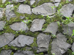 Stone Wall Moss Texture - Public Domain Pictures