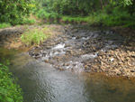 Stream Water Greenery - Public Domain Pictures