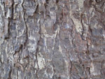 Tree Bark Close Up Texture - Public Domain Pictures