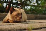 Cute Cat Brown - Public Domain Pictures