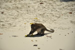 Monkey Beach Sands - Public Domain Pictures