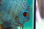 Aquarium Fish Tank - Public Domain Pictures