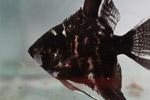 Black Fish Tank - Public Domain Pictures