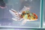 Fish Aquarium - Public Domain Pictures