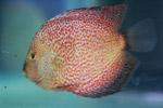 Fish - Public Domain Pictures