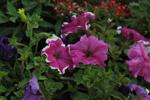 Wild Flowers 2 - Public Domain Pictures