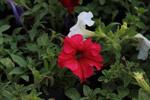 Wild Flowers - Public Domain Pictures