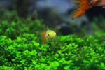Yellow Fish - Public Domain Pictures