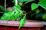 Caterpillars Eating Leaves - Public Domain Pictures