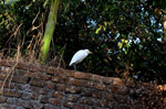 White Bird 2 - Public Domain Pictures