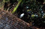White Bird - Public Domain Pictures