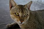 Cat 3 - Public Domain Pictures