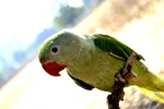 Green Parrot Branch 2 - Public Domain Pictures
