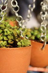 Hanging Plant Pots - Public Domain Pictures