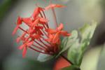 Orange Flowers Closeup - Public Domain Pictures