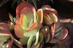 Plant 1 - Public Domain Pictures