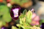 Voilet Flower - Public Domain Pictures