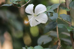 White Shoe Flower - Public Domain Pictures