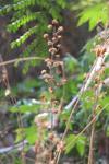 Wild Plant Closeup - Public Domain Pictures