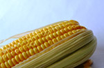 Corn - Public Domain Pictures
