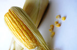Maize Corn Pieces - Public Domain Pictures