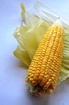 Maize - Public Domain Pictures