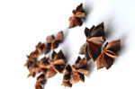 Star Anise 3 - Public Domain Pictures