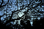 Tree Sky - Public Domain Pictures