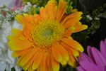 Orange Yellow Daisy - Public Domain Pictures