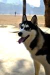 Dog 2 - Public Domain Pictures