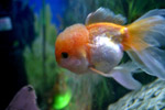 Fish In Tank - Public Domain Pictures