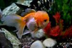 Fish Tank - Public Domain Pictures