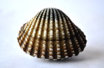 Shell - Public Domain Pictures
