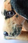 Dog Sad Face - Public Domain Pictures