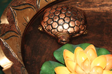 290-tortoise-in-water-feng-shui - Public Domain Pictures