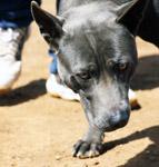 Black Dog Sun - Public Domain Pictures