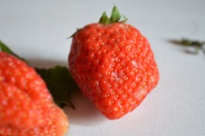 316-strawberry - Public Domain Pictures