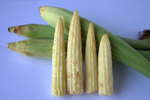 Baby Corn - Public Domain Pictures